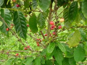 091016coffee2